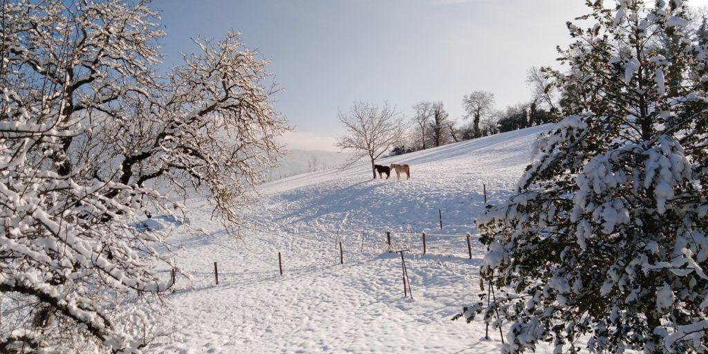 Caval'Aise sous la neige
